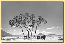 Elephants and Palm Tree by Robert Carr-Hartley